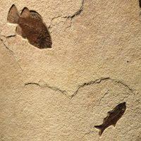 Fossil Sculpture 02_140521400 Sculpture 2