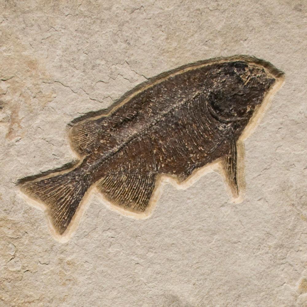 Fossil Sculpture 02_150105020 Sculpture