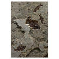 Fossil Mural 02_150326425am