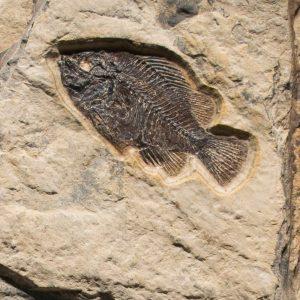 Fossil Sculpture 02_150430501 Sculpture