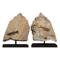 Fossil Sculpture 02_150518367 Sculpture
