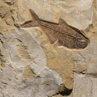 Fossil Sculpture 02_150518367 Sculpture 2