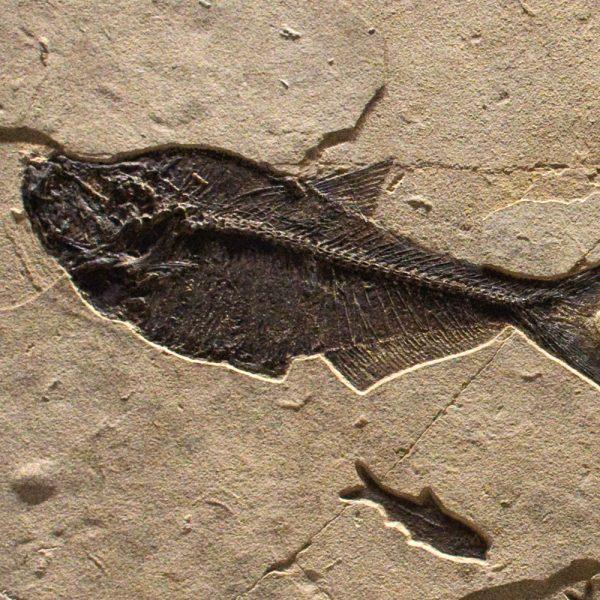 Fossil Mural 02_Q150611002cm