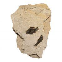 Fossil Mural 02_150805514am