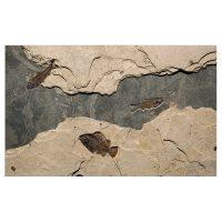 Fossil Mural 02_150904500am