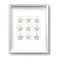 16 x 20 Achromic Starfish