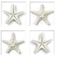 16 x 20 Achromic Starfish 2