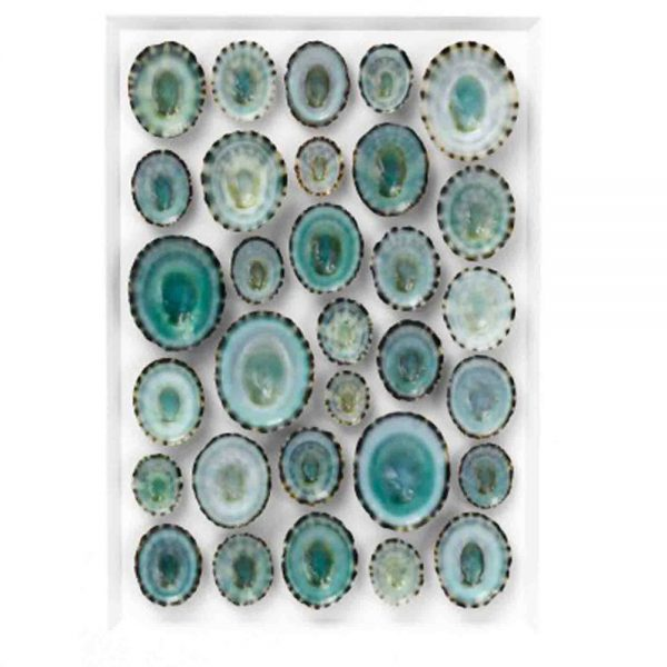 16 x 20 Aqua Limpet Mosaic