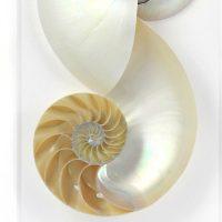 16 x 20 Nautilus 2