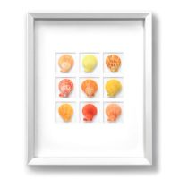 16 x 20 Noble Scallops - Citrus -