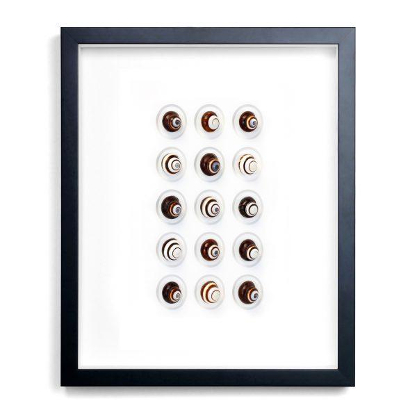 16 x 20 Regal Snails