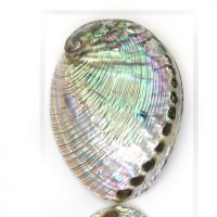 16 x 20 Silver Abalone Duo 2