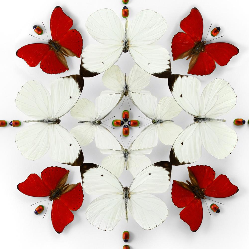 20x20 Crimson Inflorescence