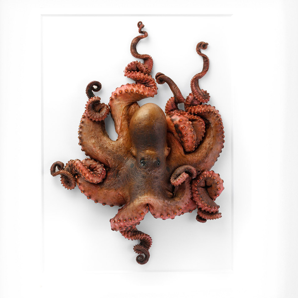 20 x 24 Octopus