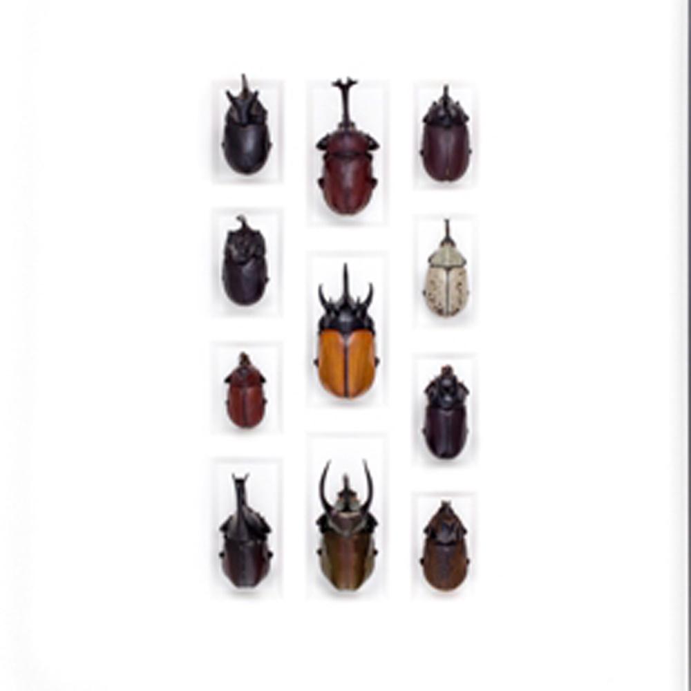 20 x 24 Rhino Beetle Mosaic