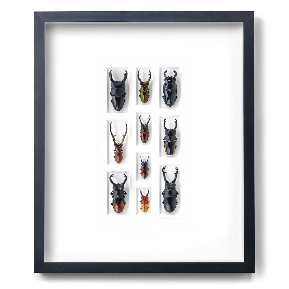 20 x 24 Stag Beetle Mosaic