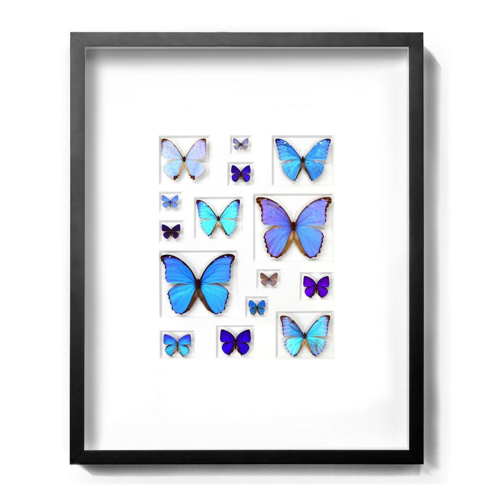 24 x 30 Cerulean Butterflies