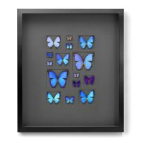 24 x 30 Cerulean Butterfly Mosaic Framed Pheromone