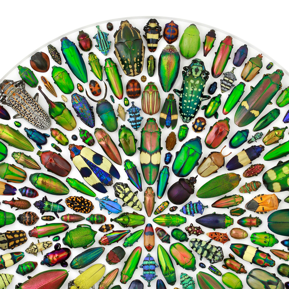 24 x 30 Limited Edition Mosaic with Insects