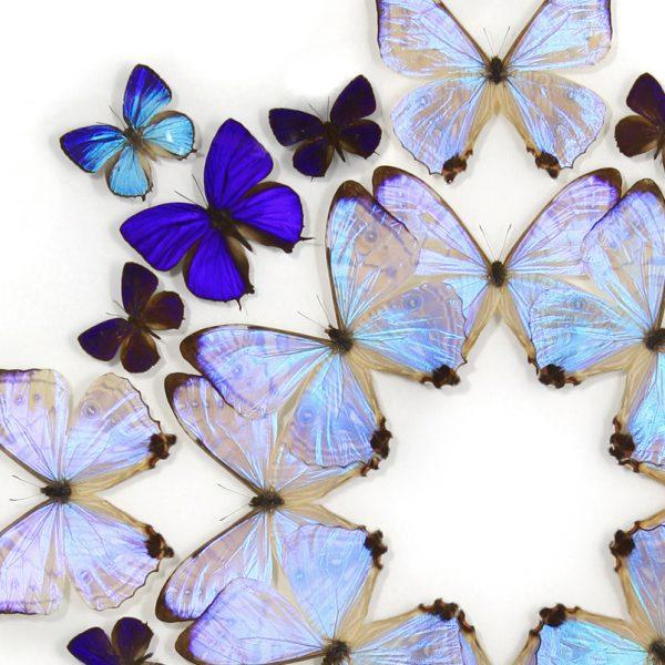 24 x 30 Lumens Prism