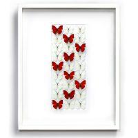 24 x 30 Sangaris Levels - Butterflies