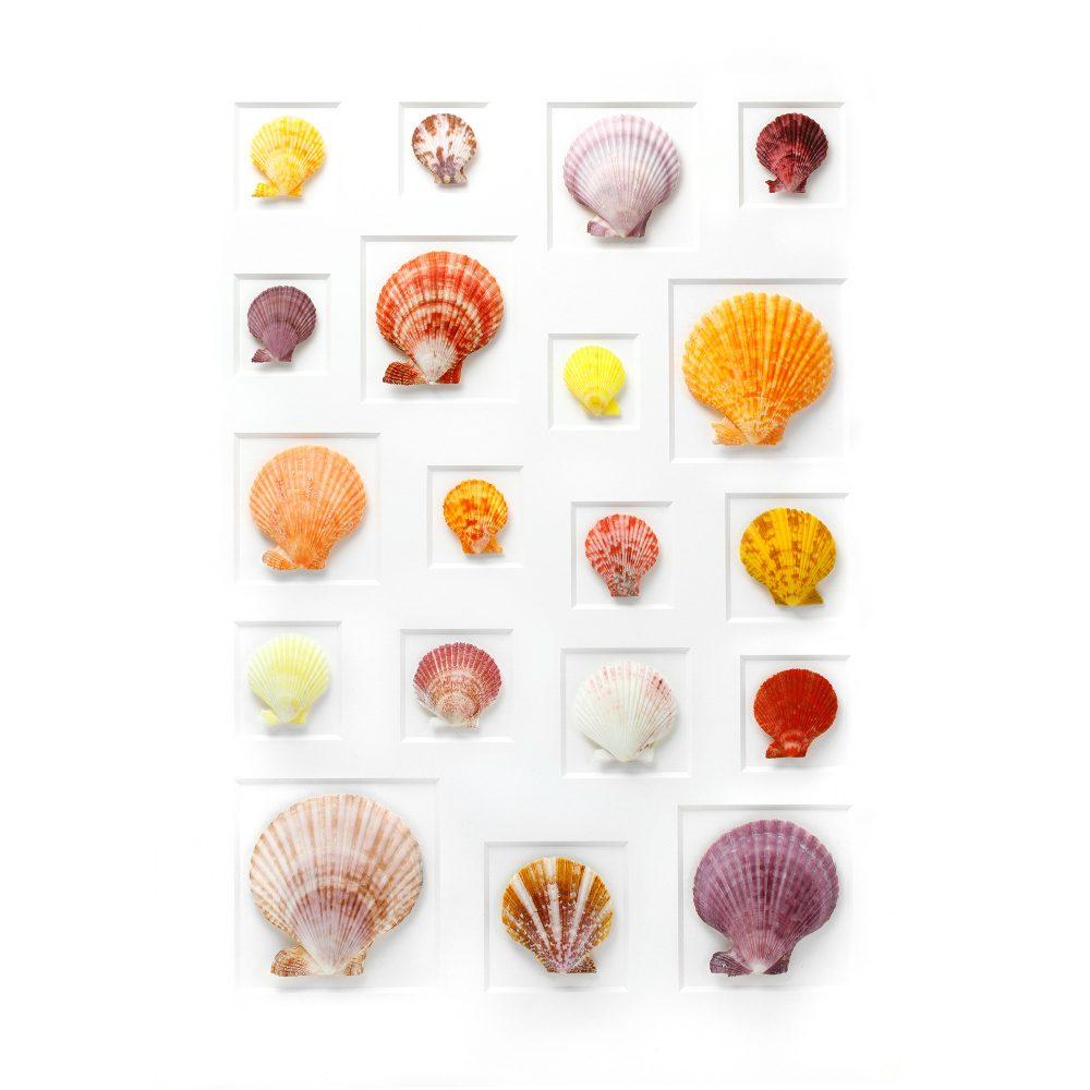 24 x 30 Select Scallop Mosaic