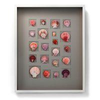 24x30 Select Scallop Mosaic (Berry)