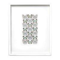 24 x 30 Silver Celestina - Butterflies