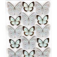 24 x 30 Silver Celestina – Butterflies 2