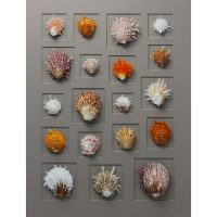 24 x 30 Spiny Oyster Mosaic