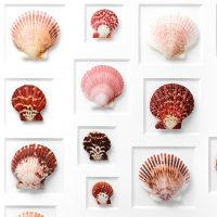 24 x 30 Variegated Scallops 2