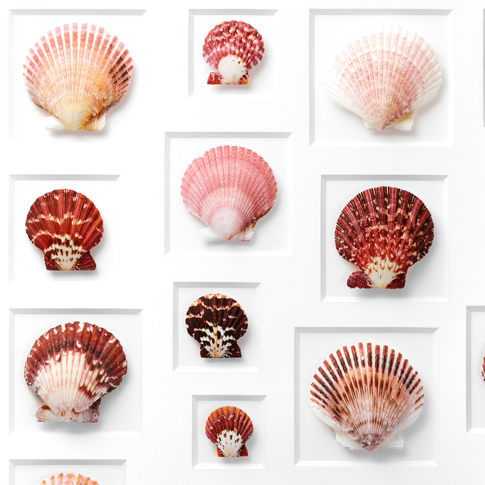 24 x 30 Variegated Scallops