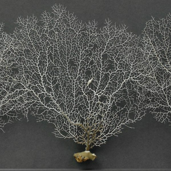 32x20 Achromic Sea Fans