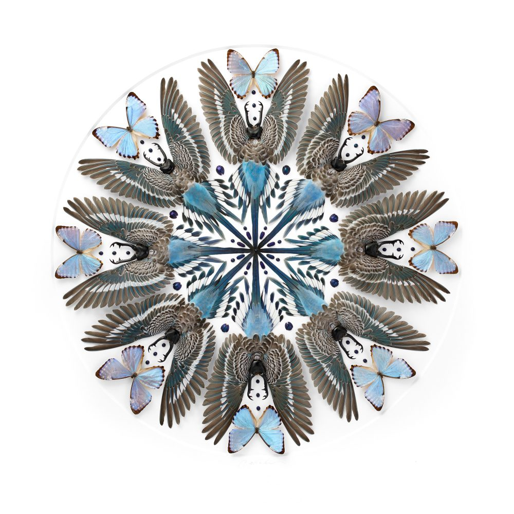 32 x 32 Parakeet Mandala No. 1