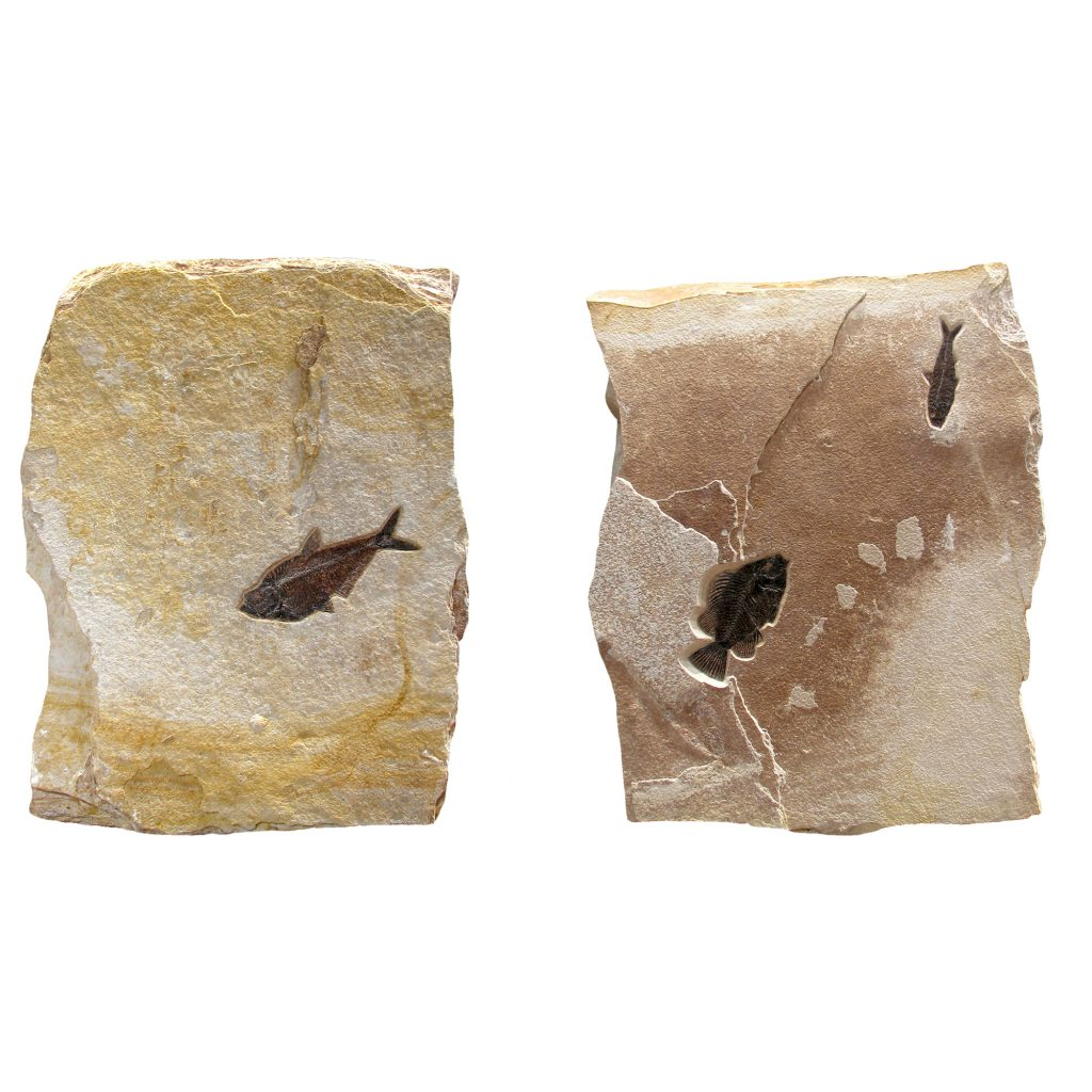 Fossil Sculpture 02_1112085005
