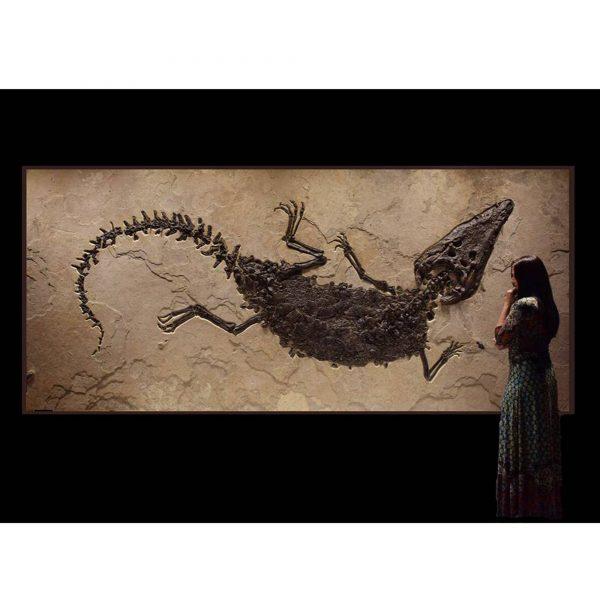 Crocodile Fossil Mural