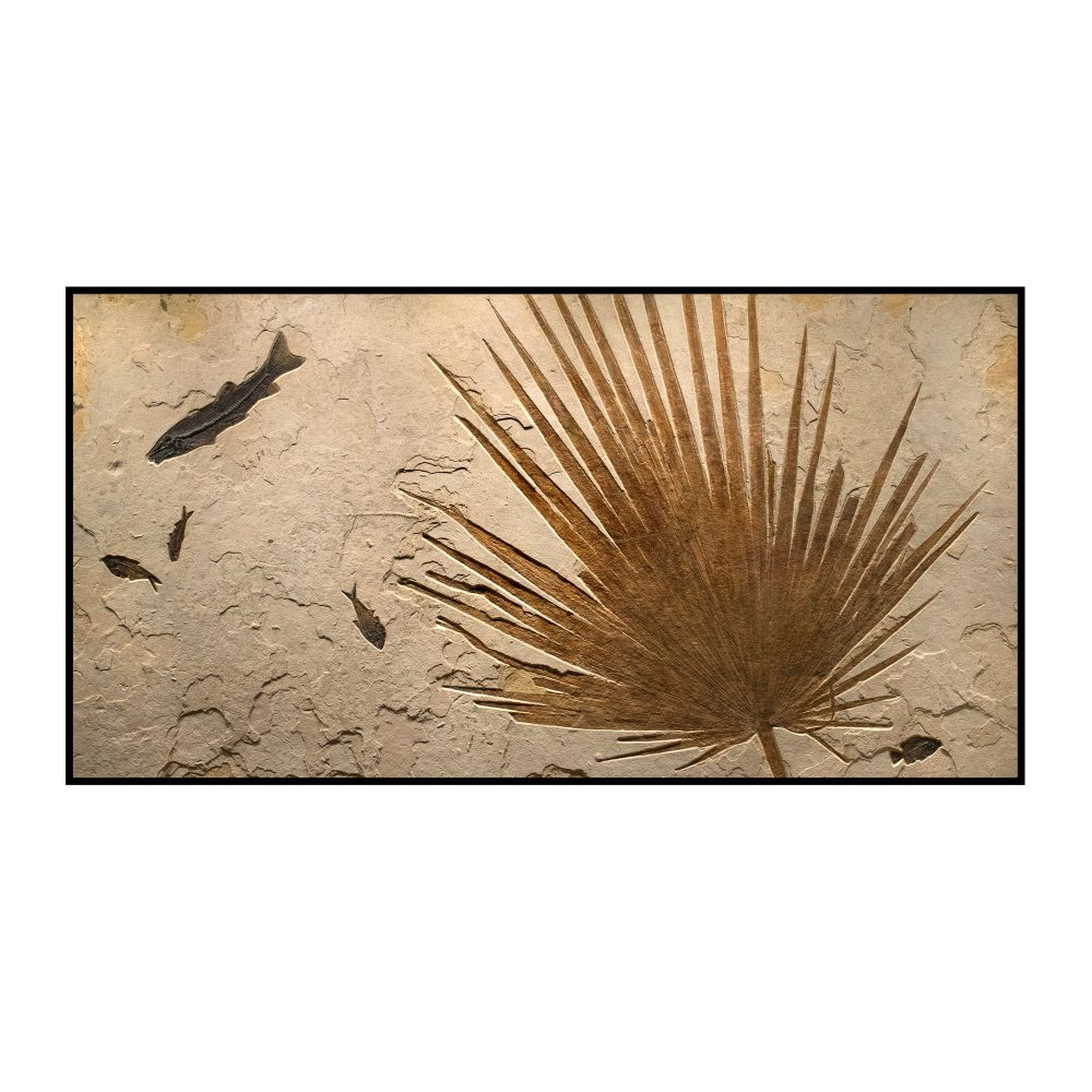 Palm and Fish Fossil Mural