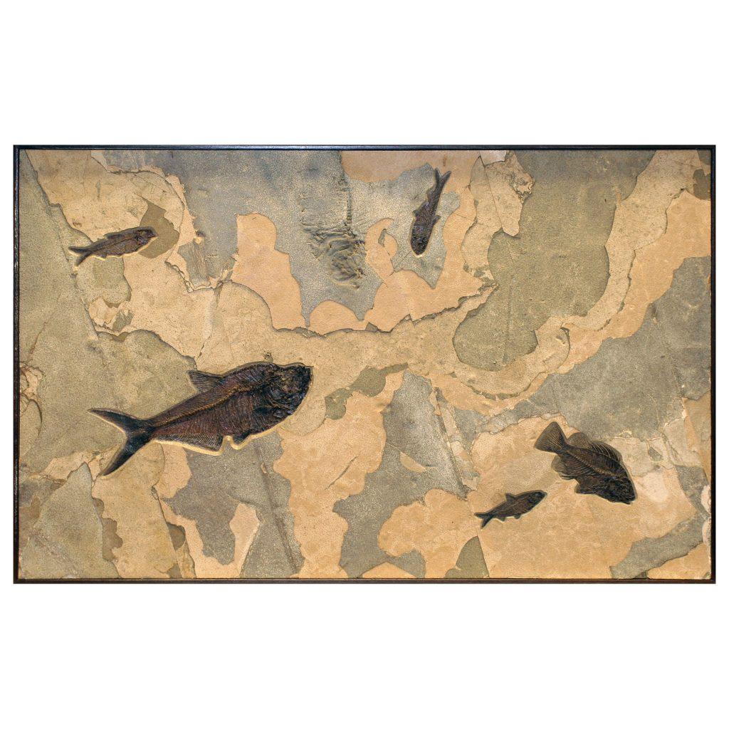 Fossil Mural Q070626014cm