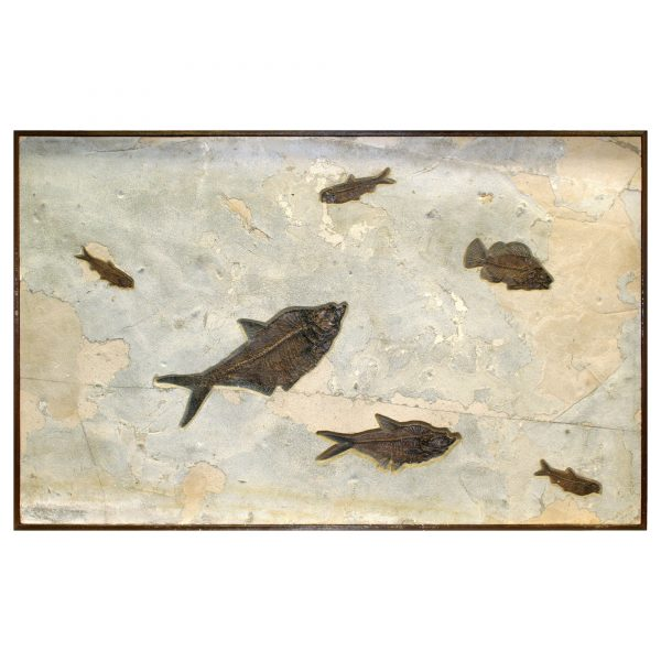Fossil Collector Mural Q070725003cm