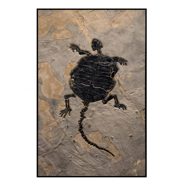 Turtle Fossil Mural