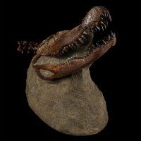 Fossilized Alligator Skull on Consolidated Matrix