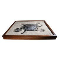 Fossil Alligator Snapping Turtle 2