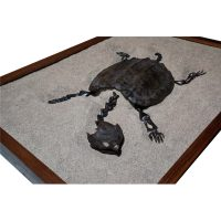 Fossil Alligator Snapping Turtle 3