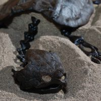 Fossil Alligator Snapping Turtle 4