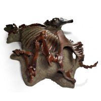 Fossilized North American Horse 3