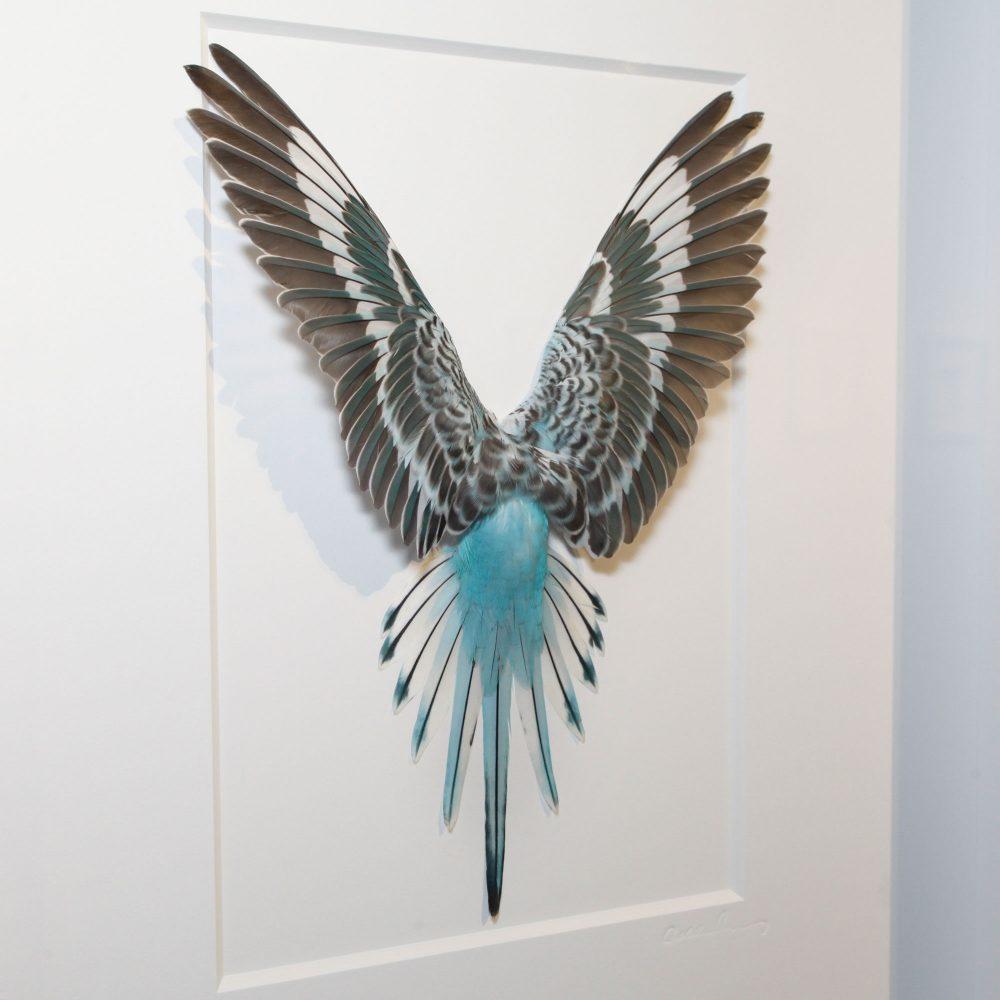 14 x 18 Shell Parakeet Bird - Black and white