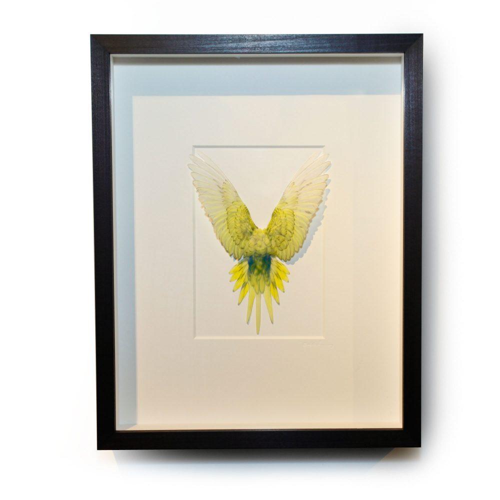14 x 18 Shell Parakeet Bird - Light Green and yellow