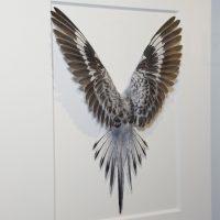 14 x 18 Shell Parakeet Bird – White, grey and yellow 2