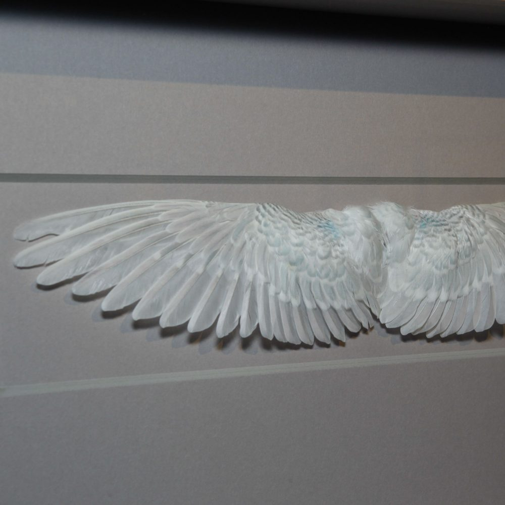 20 x 8 Wings - Grey