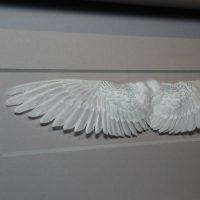20 x 8 Wings – Grey 2